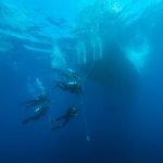 Divers-on-hangline-Saba-Caribbean-Explorer-2-Explorer-Ventures-Liveaboard-Diving