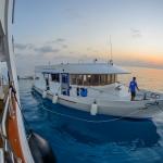 Dhoni-approaching-Carpe-Novo-Explorer-Maldives-Explorer-Ventures-Liveaboard-Diving