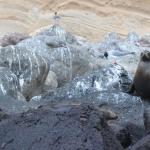 Galapagos-Sea-Lion-on-rocks-Humboldt-Explorer-Galapagos-Explorer-Ventures-Liveaboard-Diving