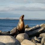 Galapagos-sea-lion-Humboldt-Explorer-Galapagos-Explorer-Ventures-Liveaboard-Diving