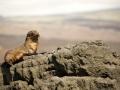 Galapagos-Fur-Seal-sleepy-Humboldt-Explorer-Galapagos-Explorer-Ventures-Liveaboard-Diving
