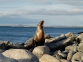 Galapagos-sea-lion-Humboldt-Explorer-Galapagos-Explorer-Ventures-Liveaboard-Diving