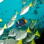 School-of-fish-Humboldt-Explorer-Galapagos-Explorer-Ventures-Liveaboard-Diving