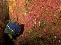 King-Angelfish-Humboldt-Explorer-Galapagos-Explorer-Ventures-Liveaboard-Diving