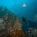 Beautiful-underwater-scene-Carpe-Vita-Explorer-Maldives-Explorer-Ventures-Liveaboard-Diving