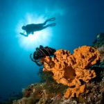 Diver-and-coral-sunlight-Carpe-Vita-Explorer-Maldives-Explorer-Ventures-Liveaboard-Diving
