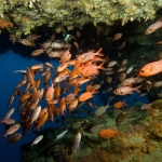 Soldierfish-Carpe-Vita-Explorer-Maldives-Explorer-Ventures-Liveaboard-Diving