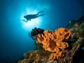 Diver-and-coral-sunlight-Carpe-Vita-Explorer-Maldives-Explorer-Ventures-Liveaboard-Diving
