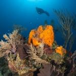 Coral-Diver-Turks-and-Caicos-Explorer-2-Explorer-Ventures-Liveaboard-Diving