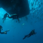 Divers-under-boat-Turks-and-Caicos-Explorer-2-Explorer-Ventures-Liveaboard-Diving