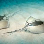 Southern-Stingrays-Turks-and-Caicos-Explorer-2-Explorer-Ventures-Liveaboard-Diving