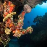 Spanish-Anchor-Turks-and-Caicos-Explorer-2-Explorer-Ventures-Liveaboard-Diving