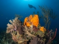 Coral-Diver-Turks-and-Caicos-Explorer-2-Explorer-Ventures-Liveaboard-Diving