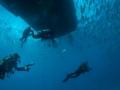 Divers-under-boat-Turks-and-Caicos-Explorer-2-Explorer-Ventures-Liveaboard-Diving