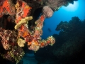 Spanish-Anchor-Turks-and-Caicos-Explorer-2-Explorer-Ventures-Liveaboard-Diving