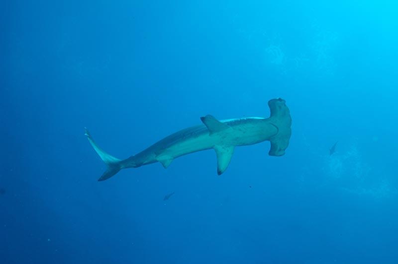 Galapagos-09-39
