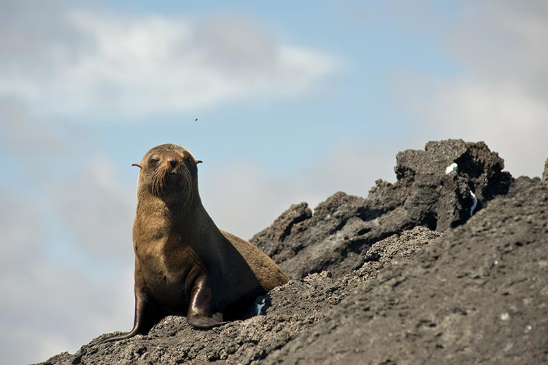 Galapagos Island pictures
