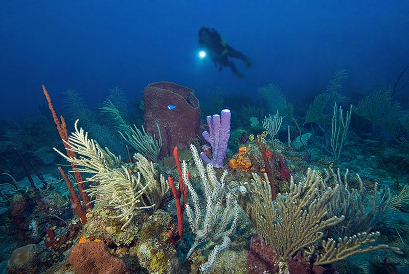 Saba, St. Kitts and St. Maarten Liveaboard Diving