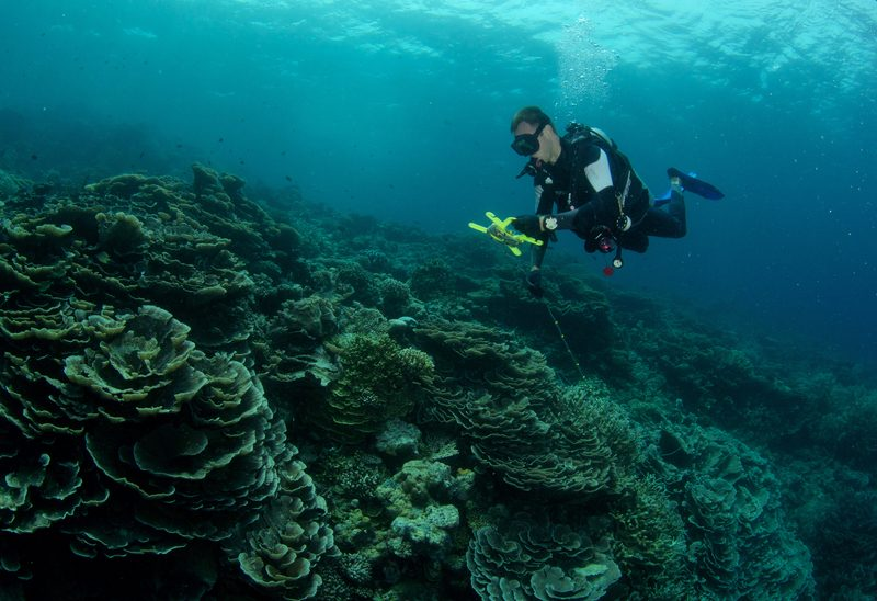 Dive with a Purpose Reef Conservation Maldives