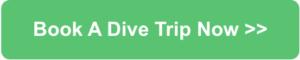 book dive trip holidays
